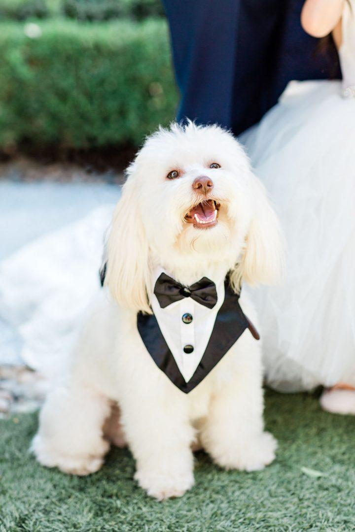 dog in tuxedo at Monji Gardens wedding